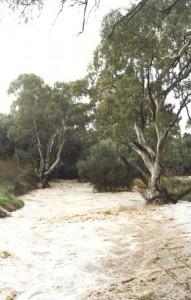 flooddrycreek3