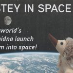 The World's first echidna launched 30,000m into space!